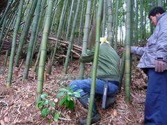 竹の切り方
