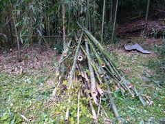 切った竹の山