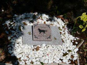 テラちゃんの墓