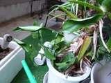 みかんの葉